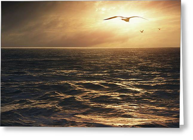 Seagulls Into The Sun Greeting Card by Carlos Caetano