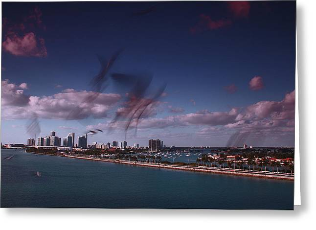 Seagulls Miami Greeting Card by Twenty Forever