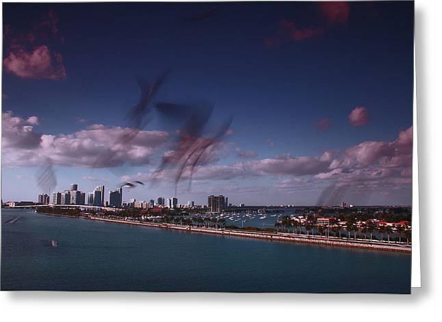 Seagulls Miami Greeting Card