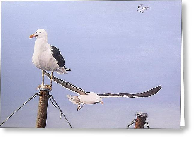 Seagulls Greeting Card by Natalia Tejera