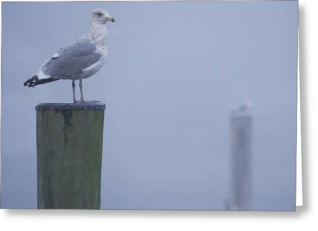 Seagulls On Pilings In Mystic Ct Greeting Card by Kirkodd Photography Of New England