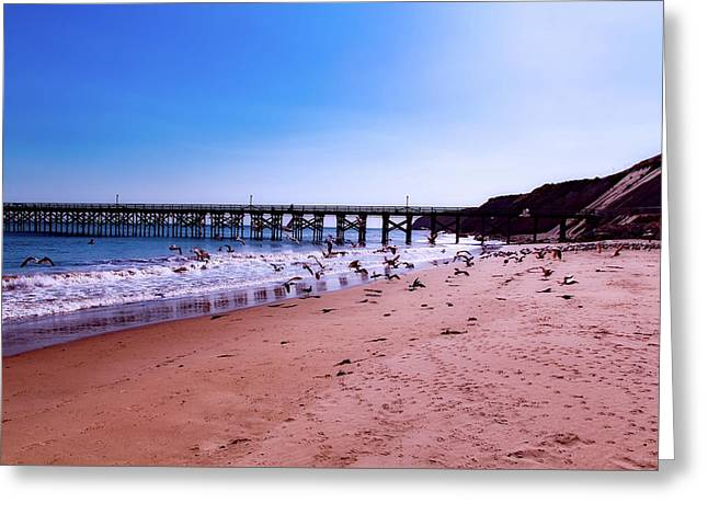 Seagulls On The Beach Greeting Card