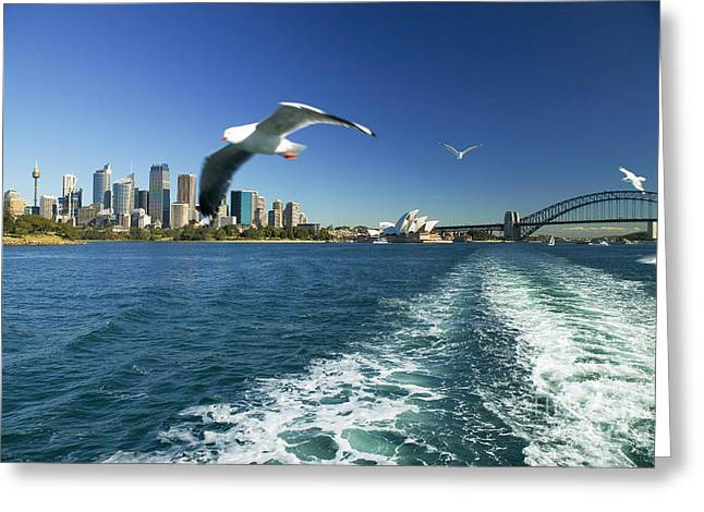 Seagulls Over Sydney Harbor Greeting Card