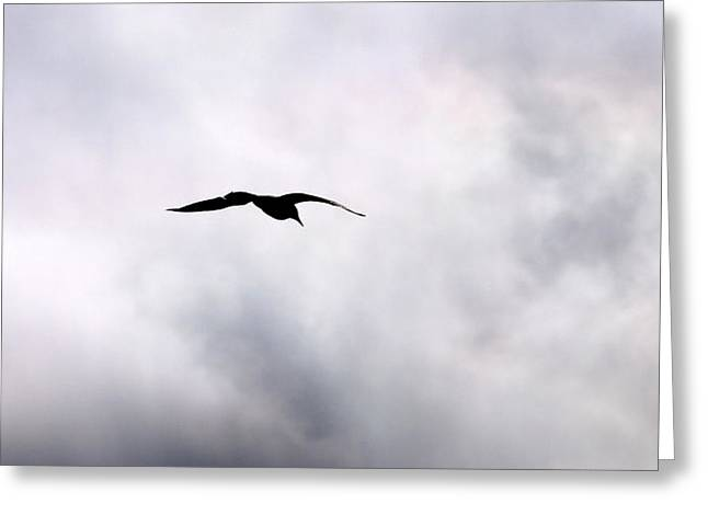 Greeting Card featuring the photograph Seagull's Sky 2 by Jouko Lehto