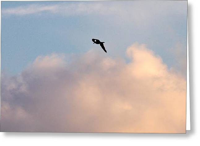 Greeting Card featuring the photograph Seagull's Sky 3 by Jouko Lehto