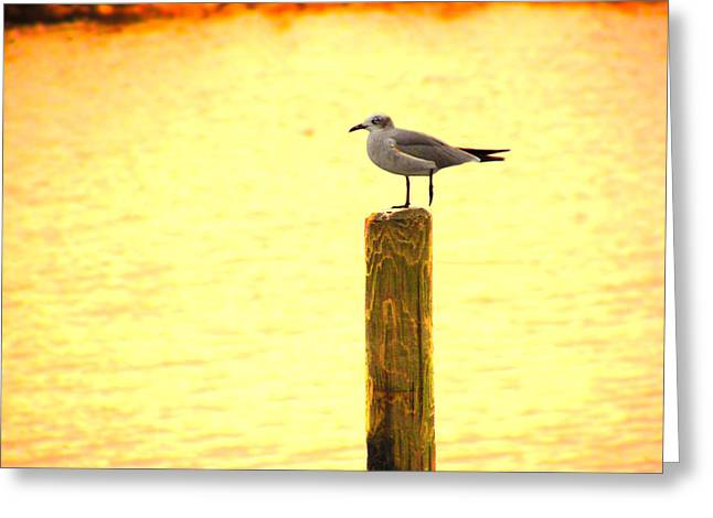 Seagulls Sunset Greeting Card by Laura Brightwood
