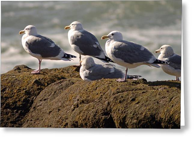 Seaguls Greeting Card by Curtis Gibson