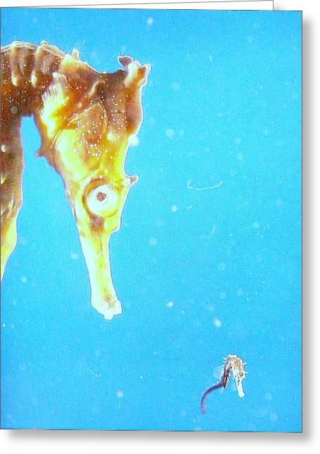 Seahorse Greeting Card by Cindy Yeakel