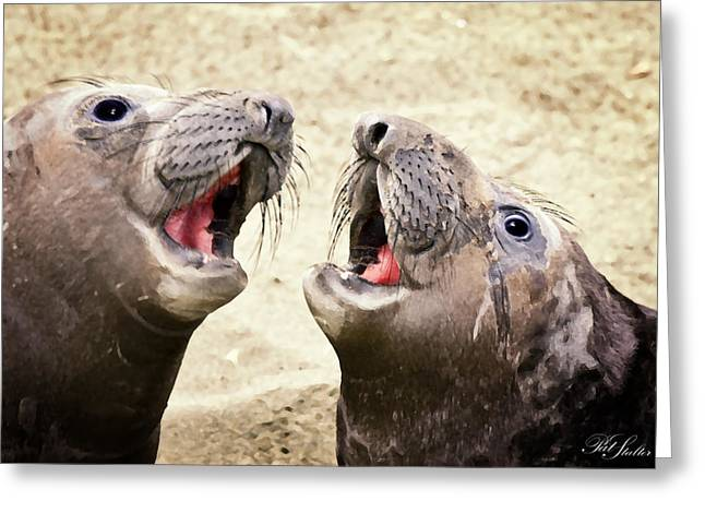 Seal Duet Greeting Card by Patricia Stalter