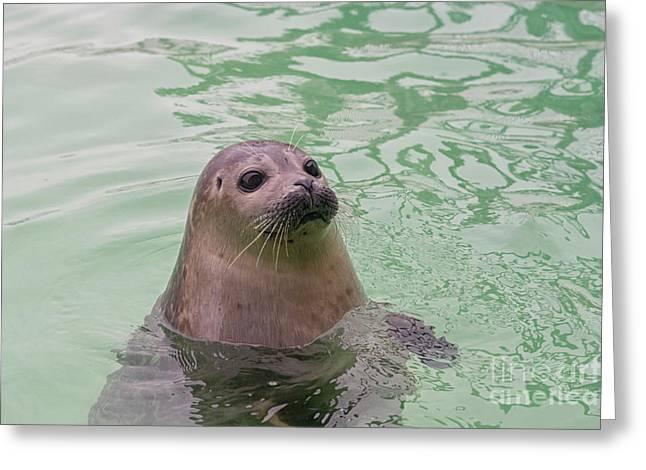 Seal In Water Greeting Card