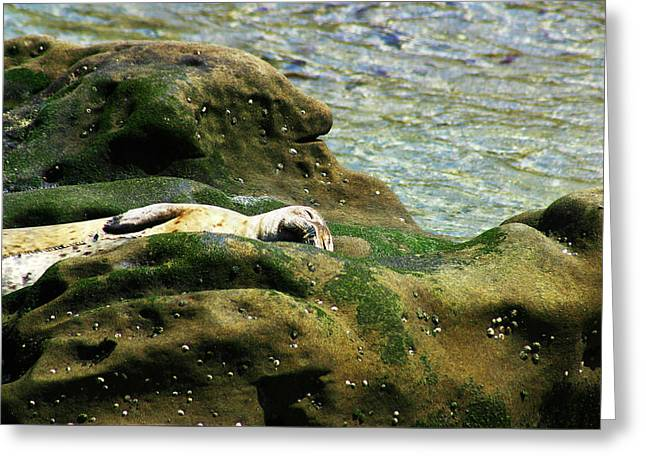 Greeting Card featuring the photograph Seal On The Rocks by Anthony Jones