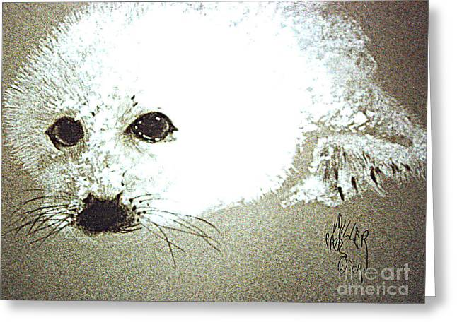 Seal Pup Portrait Greeting Card by Paul Miller