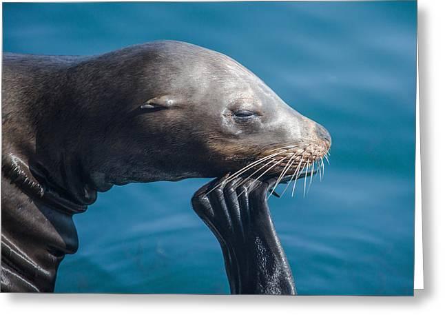Seal Greeting Card by Ralf Kaiser
