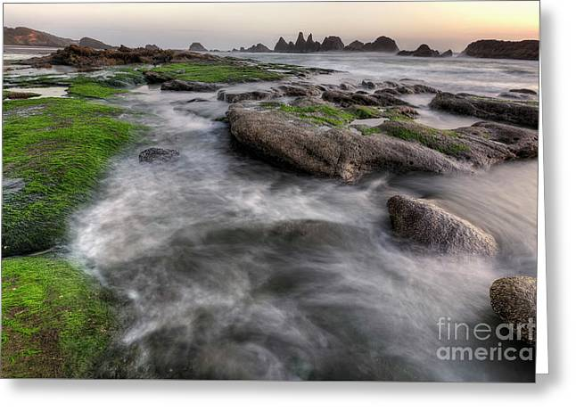 Seal Rock State Park At Sunset Greeting Card by Masako Metz