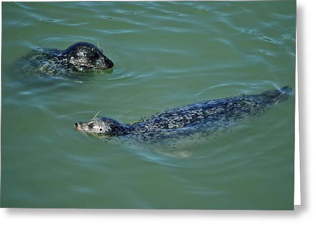 Sealion Friends Greeting Card