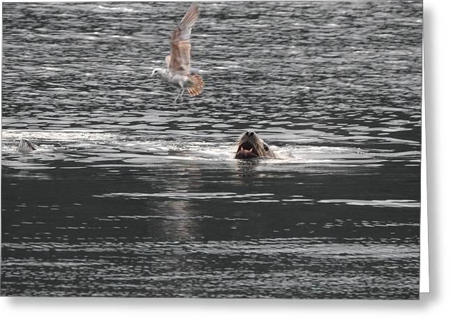 Sealion Vs Seagull Greeting Card