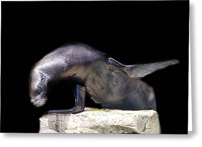 Sealion Wave Greeting Card by Martin Newman