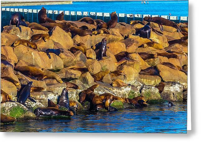 Seals On Jetty Rocks Greeting Card