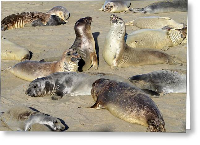Seals On The Beach Greeting Card