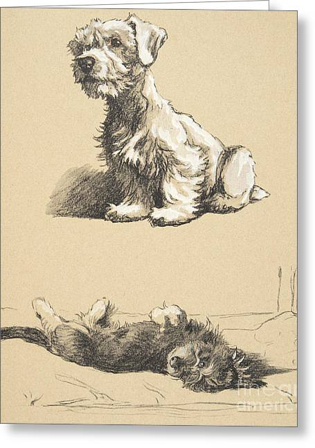 Sealyham And Rough Dachund Puppy, 1930 Greeting Card