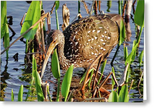 Searching For Snails Greeting Card by Dawn Currie