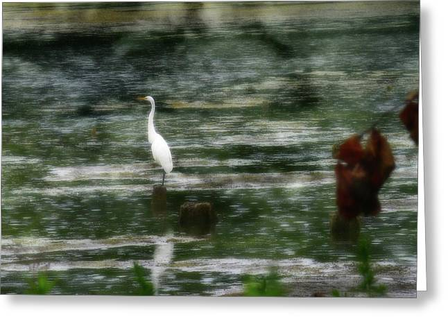 Searching... Greeting Card