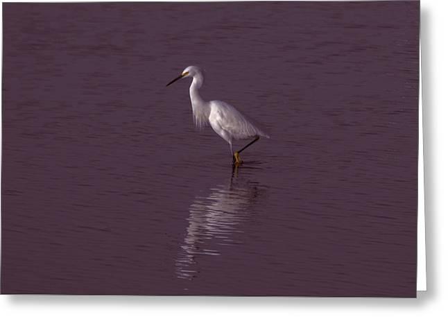 Seascape Gulf Coast, Ms F70j Greeting Card by Otri Park