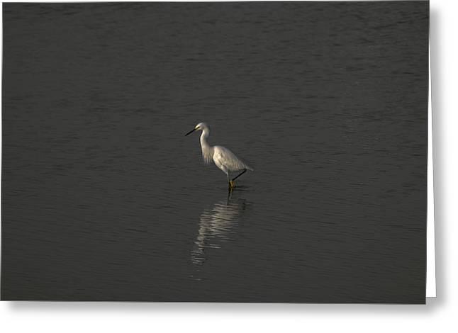 Seascape Gulf Coast, Ms F70p Greeting Card by Otri Park