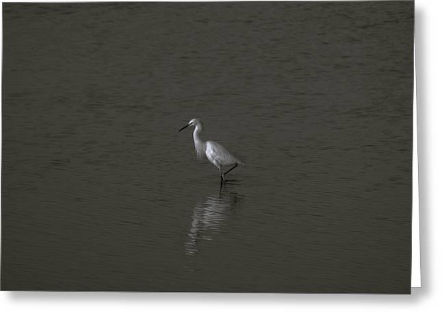 Seascape Gulf Coast, Ms F70q Greeting Card by Otri Park
