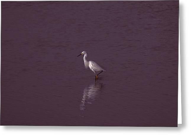 Seascape Gulf Coast, Ms F70s Greeting Card by Otri Park