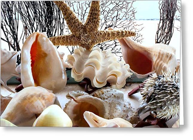 Seashell Galore Greeting Card