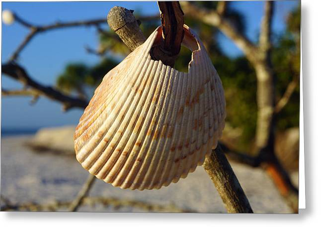 Cockelshell On Tree Branch Greeting Card