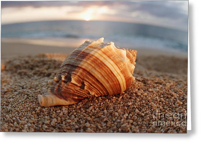 Vince Greeting Cards - Seashell in the Sand Greeting Card by Vince Cavataio - Printscapes