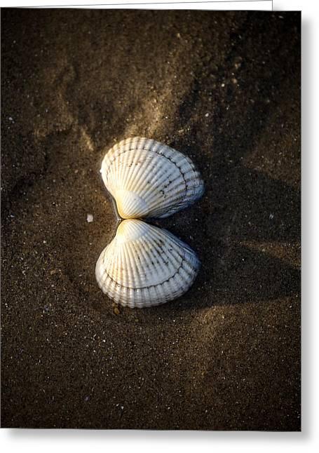 Seashell Greeting Card by Joana Kruse