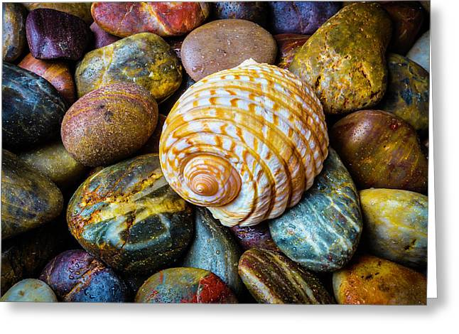 Seashell On River Rocks Greeting Card by Garry Gay