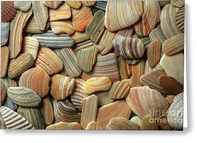 Seashell Patterns Greeting Card