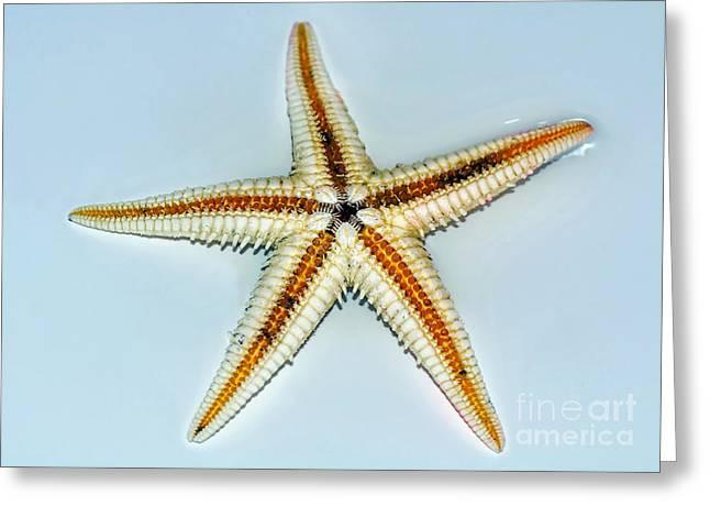 Seashell Wall Art 3 - Starfish Greeting Card by Kaye Menner