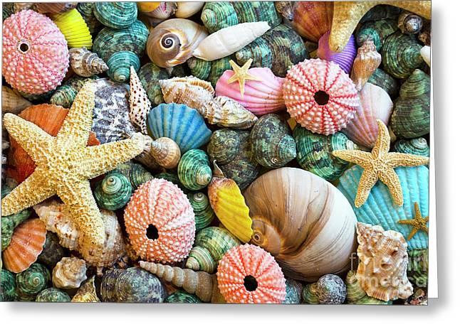 Seashells 2 Greeting Card by Bob Christopher