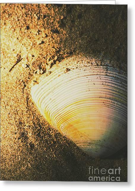 Seashells And Beach Colours Greeting Card