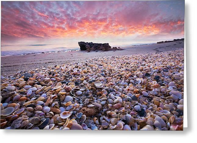 Seashells At Sunrise Greeting Card by Debra and Dave Vanderlaan
