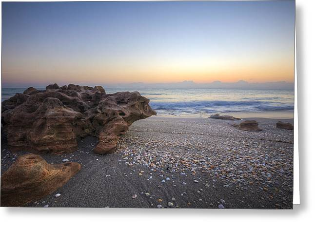 Seashells At The Seashore Greeting Card