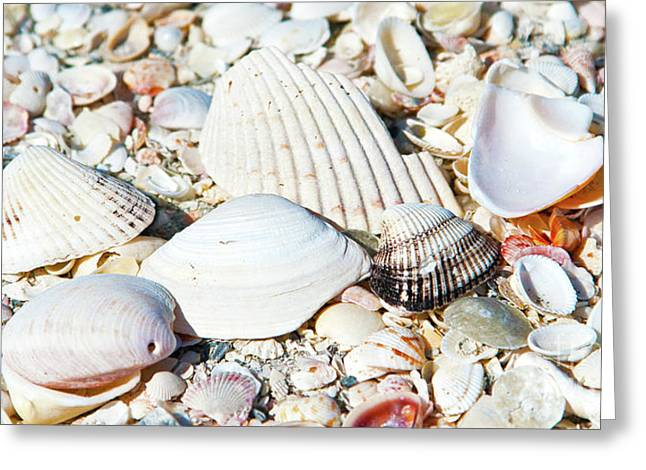 Seashells On The Beach On Vacation Greeting Card by ELITE IMAGE photography By Chad McDermott