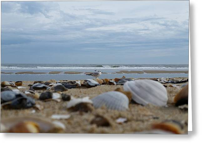Seashells Seagull Seashore Greeting Card