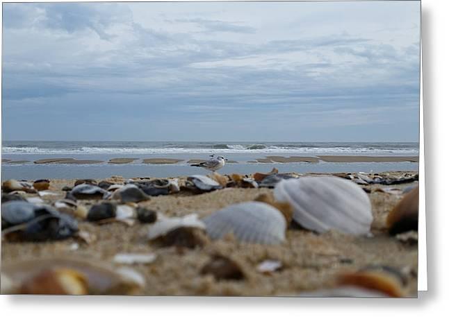 Seashells Seagull Seashore Greeting Card