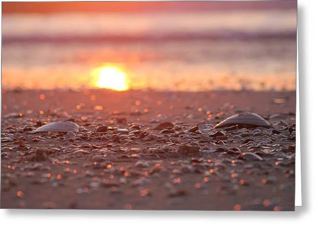 Seashells Suns Reflection Greeting Card