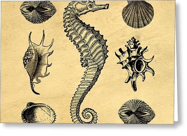 Seashells Vintage Greeting Card by Edward Fielding
