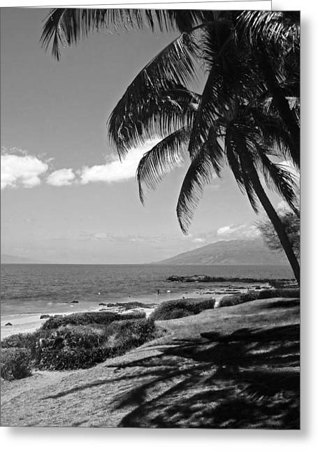 Seashore Palm Trees Greeting Card
