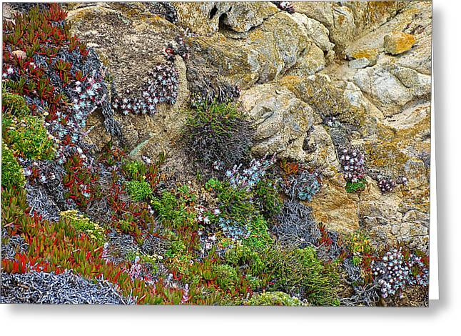 Seaside Cliff Garden In Point Lobos State Reserve Near Monterey-california  Greeting Card