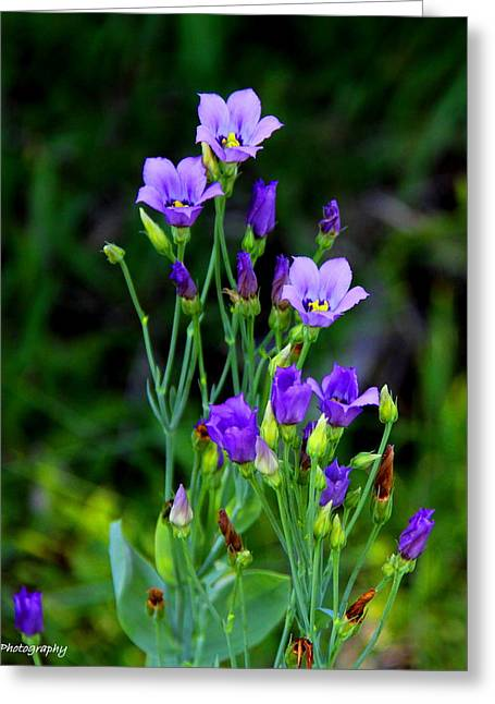 Greeting Card featuring the photograph Seaside Gentian Wildflower  by Barbara Bowen
