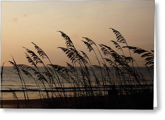 Seaside Guardians Greeting Card by JAMART Photography